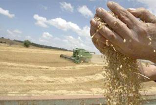 trigo-cosechado-web2