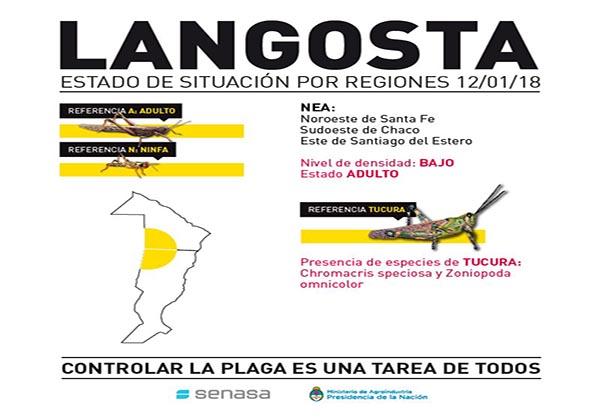 LANGOSTA1