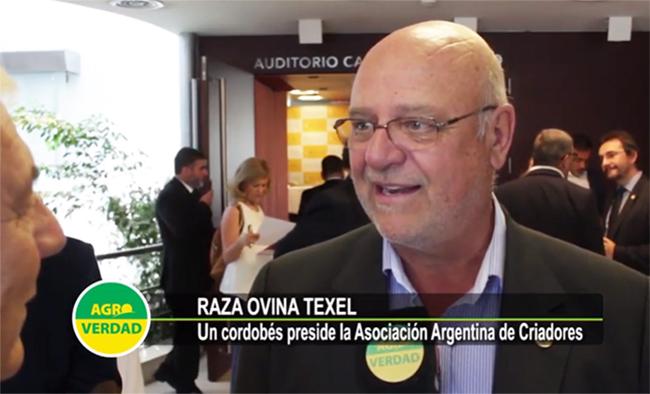 Carlos-Bergia-Raza-Ovina-Texel-650x394